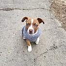 Adopt A Pet :: Prospero