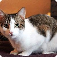 Adopt A Pet :: Crockette - Putnam, CT
