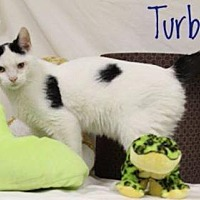 Adopt A Pet :: Turbo - Kendallville, IN