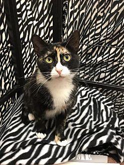 Adopt A Pet :: Verona  - Blasdell, NY