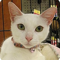 Adopt A Pet :: Nieves - Miami, FL