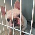 Adopt A Pet :: Rocky Gibson