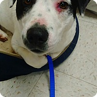 Adopt A Pet :: Nilly - Kendall, NY