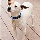Adopt A Pet :: Spaz
