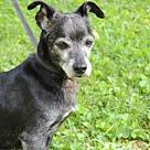 Adopt A Pet :: LOU