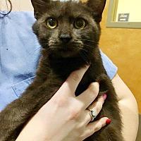 Adopt A Pet :: ISO - Cranford, NJ