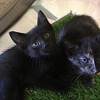 Adopt A Pet :: Tilly - Boynton Beach, FL