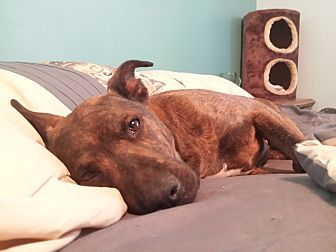 Adopt A Pet :: Lady Blue  - Snow Hill, NC