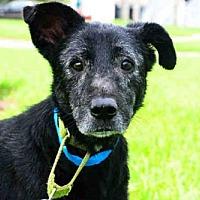 Adopt A Pet :: TRUFFLE - West Palm Beach, FL