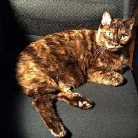 Adopt A Pet :: Willow C1706 - Shakopee, MN