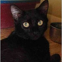 Kittens for Sale in Florida - Adoptapet com
