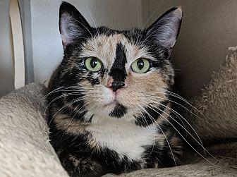 Adopt A Pet :: Rossi  - Laramie, WY