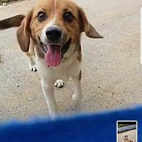 Adopt A Pet :: Choc - Oakton, VA