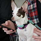 Adopt A Pet :: Zimmie