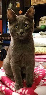 Adopt A Pet :: MOUSE  - Northwood, NH