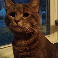 Adopt A Pet :: Ash - Columbus, OH