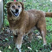 Adopt A Pet :: Samantha - Starkville, MS