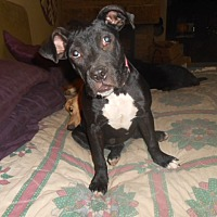 Adopt A Pet :: Angie - North Jackson, OH