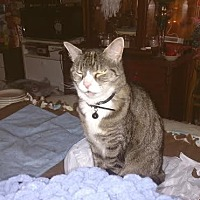 Adopt A Pet :: Cassey-Gurl (COURTESY POST) - Baltimore, MD