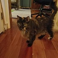 Adopt A Pet :: Luna 3 (COURTESY POST) - Baltimore, MD