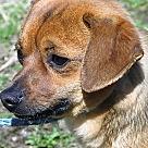 Adopt A Pet :: Ace