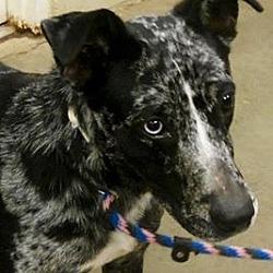 Puppies for Sale in Amarillo Texas - Adoptapet com