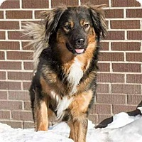 Adopt A Pet :: Koda - Pierrefonds, QC