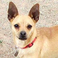 Adopt A Pet :: Dot - Phoenix, AZ