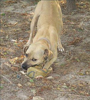 Adopt A Pet :: Gilly  - Camden, SC