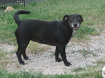 Terrier (Unknown Type, Small)/Australian Terrier Mix Dog for adoption in Melbourne, Arkansas - Maddie