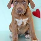 Adopt A Pet :: Haas