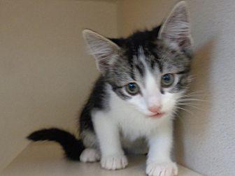Adopt A Pet :: George  - Laramie, WY