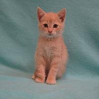 Adopt A Pet :: Zeke - Redwood Falls, MN