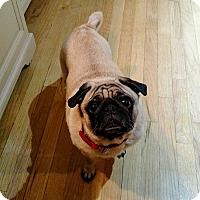 Adopt A Pet :: Lucy - Newtown, CT