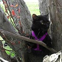 Adopt A Pet :: Kiko - Napoleon, OH