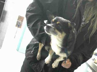 Adopt A Pet :: MAX  - Wilmington, NC
