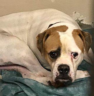 Adopt A Pet :: Urgent code red!!  - Ft Myers Beach, FL