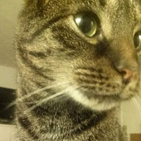 Adopt A Pet :: Tobi (COURTESY POST) - Baltimore, MD
