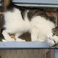 Adopt A Pet :: Louis - Montreal, QC