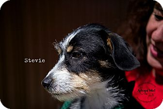 Jack Russell Terrier Mix Dog for adoption in Burbank, California - Stevie