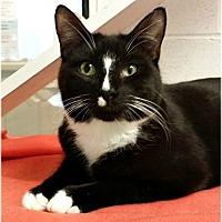 Adopt A Pet :: Tad - Huntington, NY