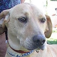 Adopt A Pet :: Jobe - Germantown, MD