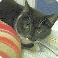 Adopt A Pet :: Frazzle - Huntington, NY