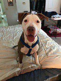 Adopt A Pet :: Love  - Anchorage, AK