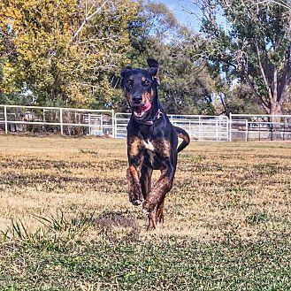 Adopt A Pet :: Parker  - Albuquerque, NM