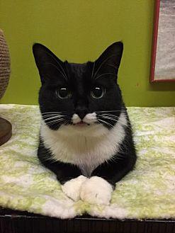 Adopt A Pet :: Miss Paw  - Blasdell, NY