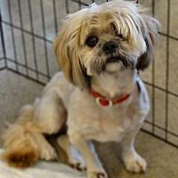 Adopt A Pet :: Prince - Tacoma, WA