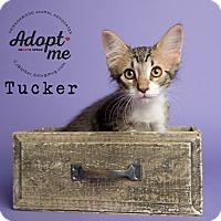 Adopt A Pet :: Tucker - Friendswood, TX