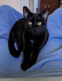 Adopt A Pet :: Ridge  - Devon, PA