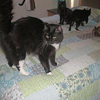 Adopt A Pet :: Noah - Parlier, CA